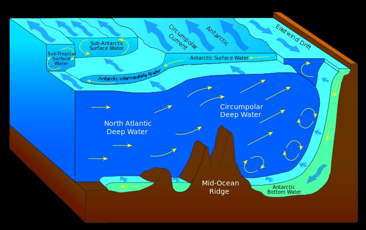 Antarctic bottom.png